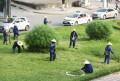 Dịch vụ cắt cỏ giá rẻ tại chuyên nghiệp
